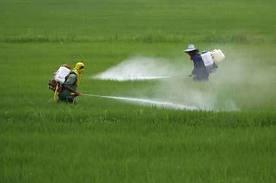 Pesticidi api