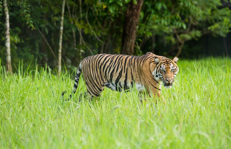 ZOOTECNIA: Disciplina della riproduzione animale