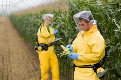 OGM e principio di precauzione.