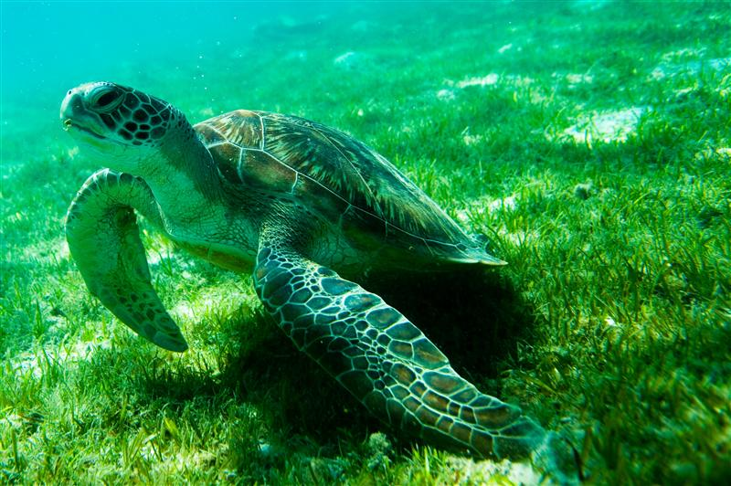 UE: protezione della natura e della biodiversità a beneficio dei cittadini e dell'economia.