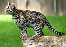 MALTRATTAMENTO ANIMALI: Detenzione degli animali e assenza di cure minime.