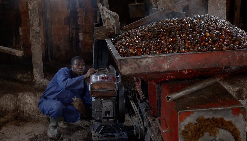 EFSA: Agenzia Europea per la Sicurezza Alimentare ritiene l'olio di palma cancerogeno.